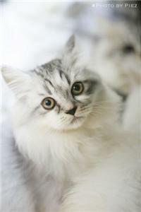 Sock-stealing cat burglar takes Loughborough by storm