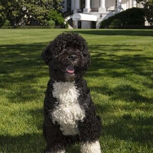 Bo Obama 'loves his socks'