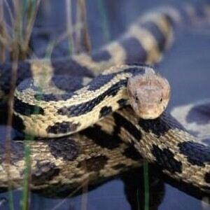 Man attempts to hide 50 snakes in socks